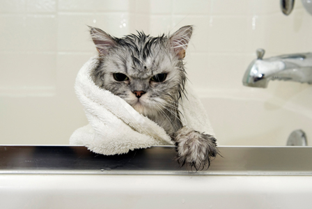 do-cats-need-baths